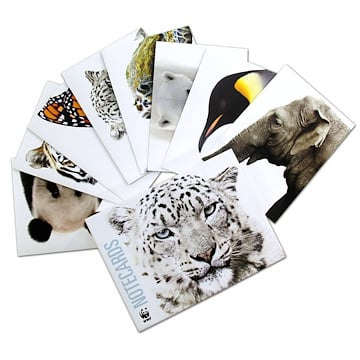 Species Note Cards