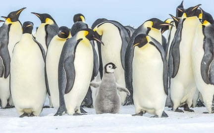 Penguin gifts when you donate to WWF