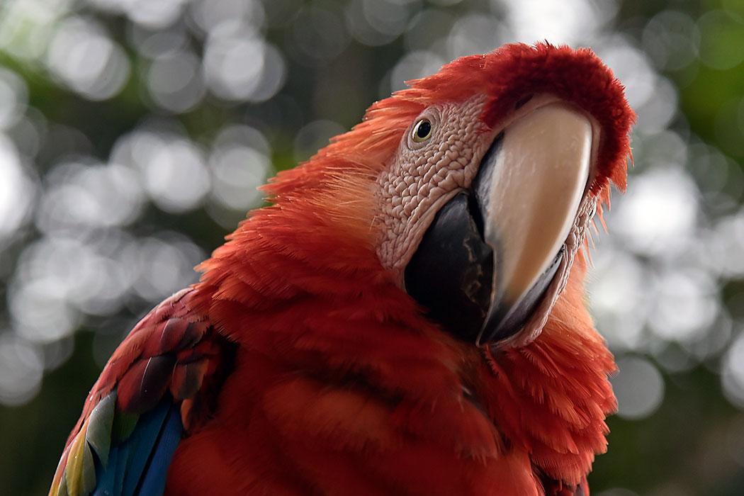 Adopt a macaw   Symbolic animal adoptions from WWF