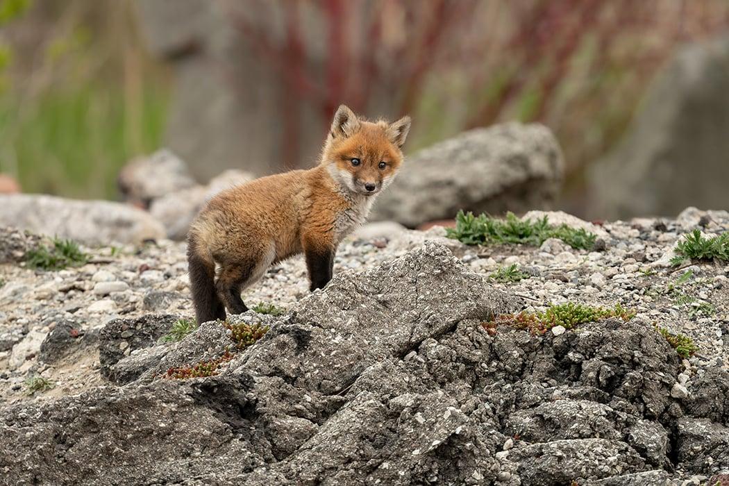 Fox Island Nature Center
