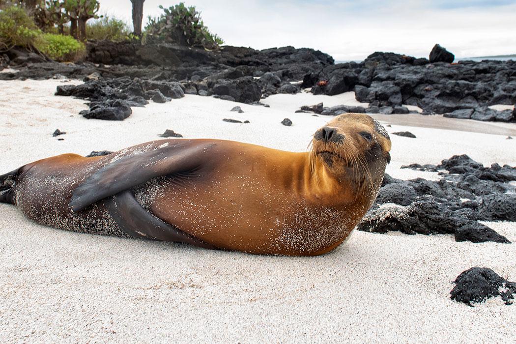 fotos de leones marinos