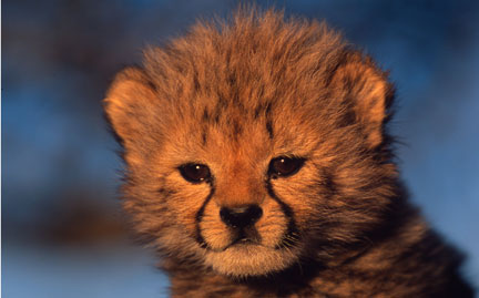 Give a set of symbolic adoptions to support WWF's global efforts to protect wild animals and… their habitats. Show More