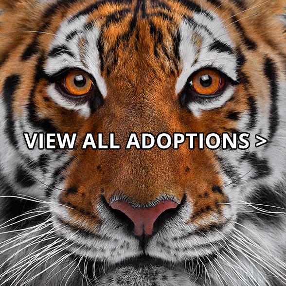 Select WWF Gift + Donate