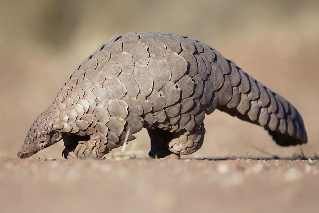world wildlife fund s gift center
