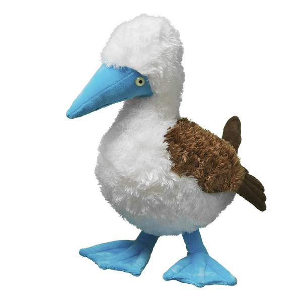 Blue Footed Booby Bird Symbolic Adoptions From Wwf