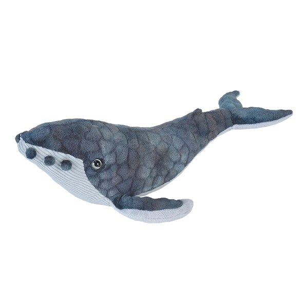 Adopt A Humpback Whale Symbolic Animal Adoptions From Wwf